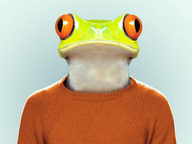 Frog More Smartly Dressed Than Human Beings