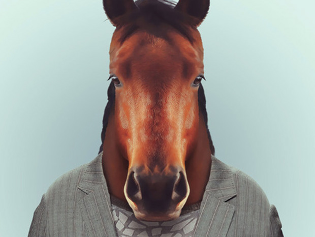 Horse More Smartly Dressed Than Human Beings