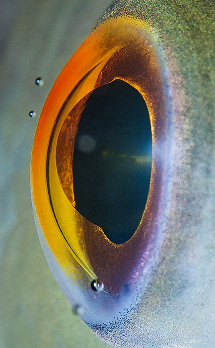 The Most beautiful eye of A fish