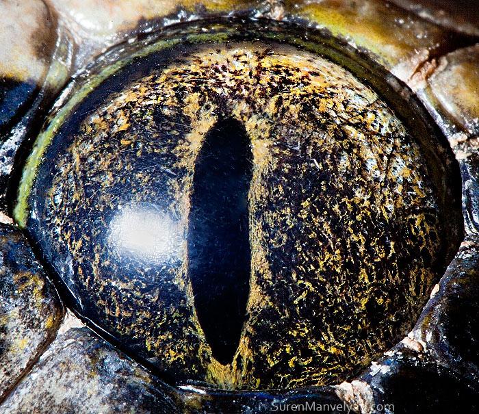 les-plus-beaux-yeux-du-regne-animal-devoiles-dans-ces-cliches-macroscopiques4