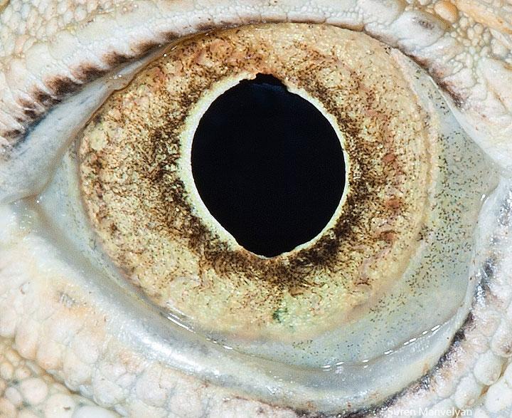 les-plus-beaux-yeux-du-regne-animal-devoiles-dans-ces-cliches-macroscopiques5