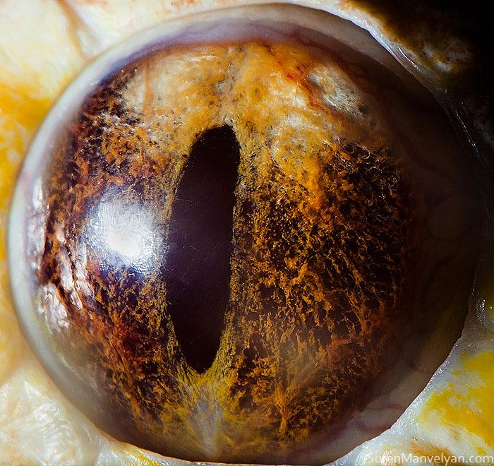 les-plus-beaux-yeux-du-regne-animal-devoiles-dans-ces-cliches-macroscopiques3