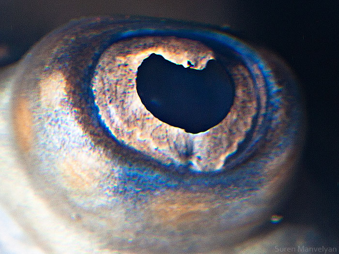 les-plus-beaux-yeux-du-regne-animal-devoiles-dans-ces-cliches-macroscopiques6