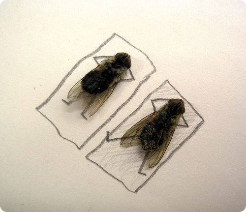 Artworks Created Using Dead Flies And Pencil Drawing