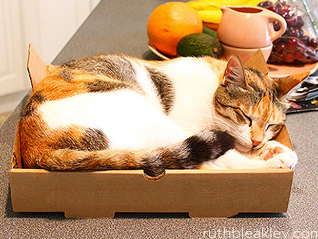 Cool ideas to reuse Pizza box: A Cat Bed