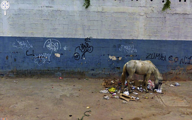 horse eating garbage:Amazing And Strange Photo Shots From Google Street View