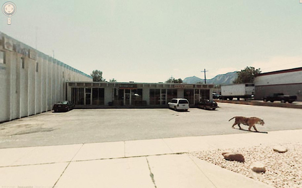 Lion on the loose:Amazing And Strange Photo Shots From Google Street View
