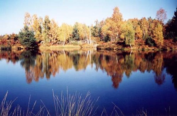 Looks Like Finland ... (Location the plateau Thousand Lakes, Vosges)    Landscapes of France That Give A Foreign Look