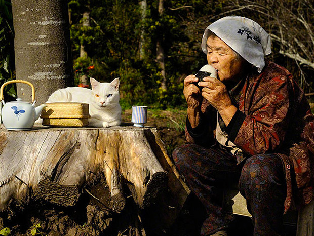 Amazing Love Friendship: Misao, the Big Mama and Fukumaru cute cat