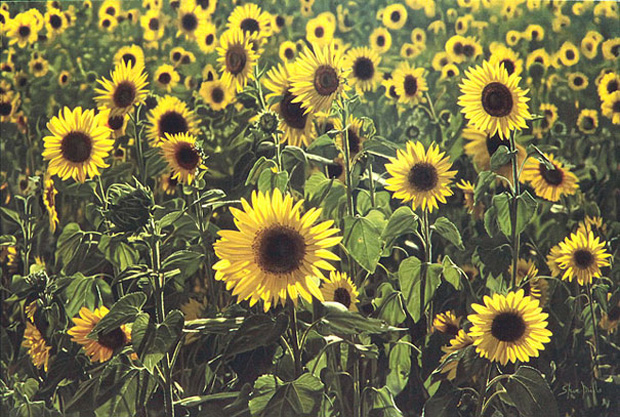 Sun Flowers: Ultra-Realistic Paintings That Merge With Reality by Steve Mills