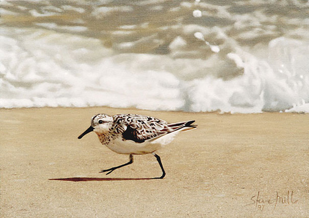 Sea Shore: Ultra-Realistic Paintings That Merge With Reality by Steve Mills