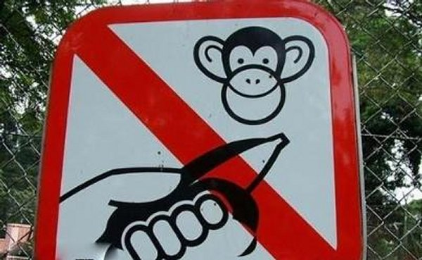 Prohibited to give Bananas to Monkeys.