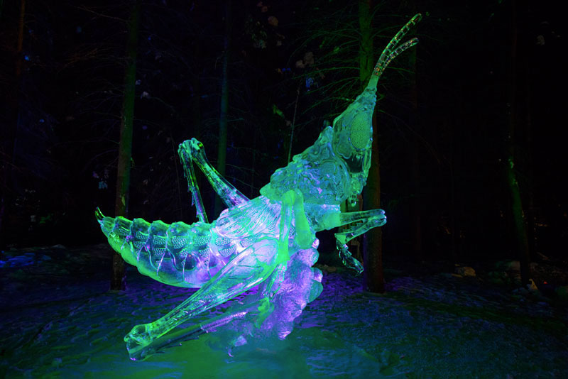grasshopper ice sculpture made from single ice block