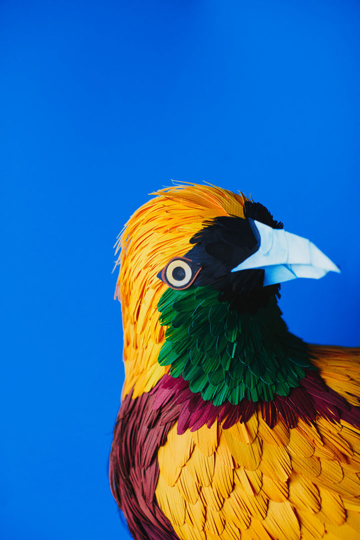 Amazing Colorful Birds Made Entirely Of Paper (Photo Gallery) - photo#8