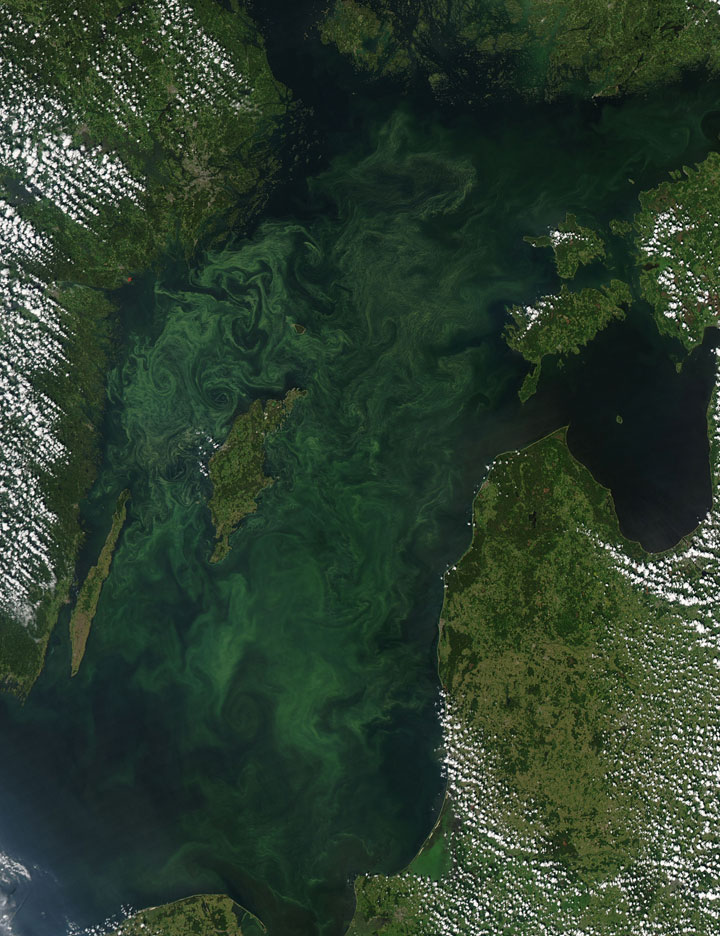 Phytoplankton in the sea