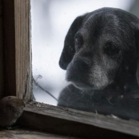 Amazing Photographs Of Animal Families Living In An Abandoned House In Woods (Photo Gallery)