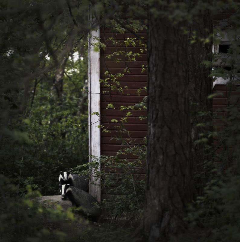 Squirrels-Animal Families Living In An Abandoned House In Woods