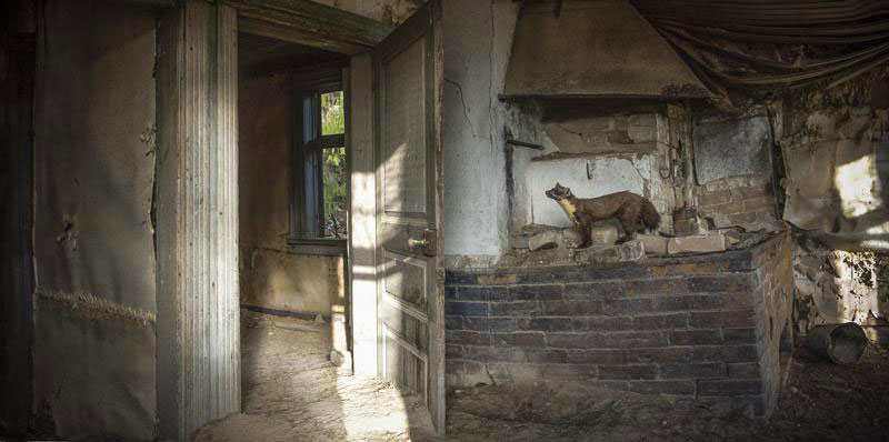 Animal Families Living In An Abandoned House In Woods