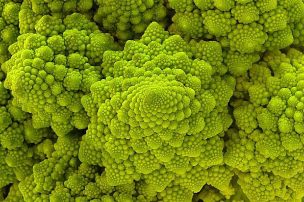 Roman cauliflower-Incredible Examples Of Fractals Found In Nature