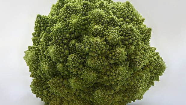 Incredible Fractals In Nature 20