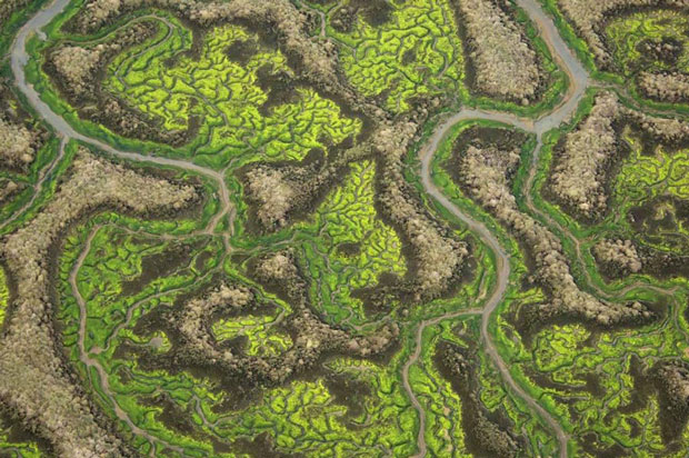 Doñana National Park in Andalusia (Spain)-Incredible Examples Of Fractals Found In Nature