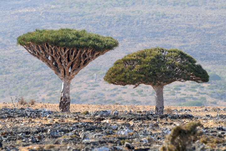 The Most Strange Landscapes Of Mysterious Island Of Socotra, Yemen