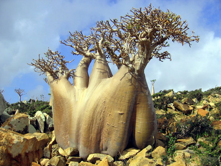 The Most Strange Landscapes Of Mysterious Island Of Socotra