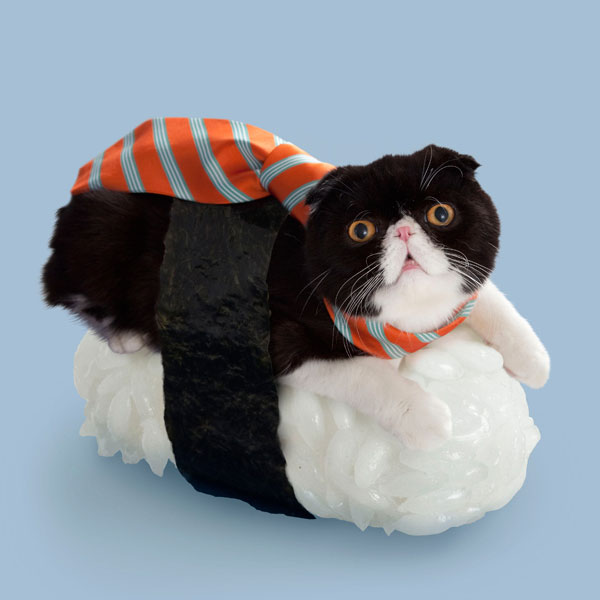Sushi Cats: The New Crazy Fashion In Japan That Turns Your Poor Kitties Into Food