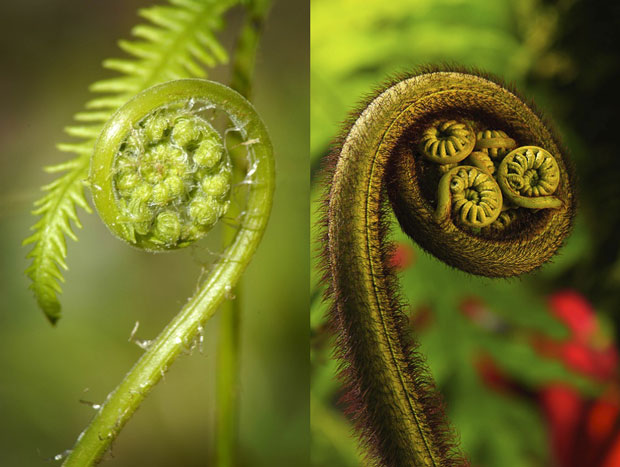 Fern-Incredible Examples Of Fractals Found In Nature