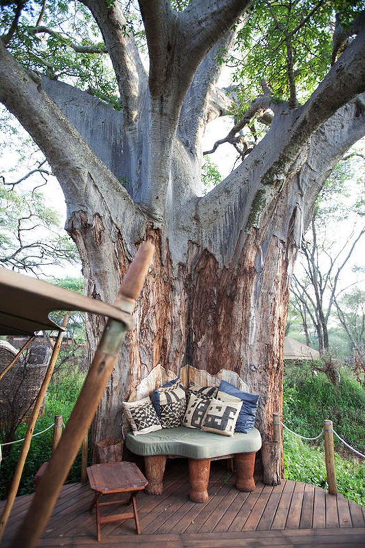 In an alcove perfectly integrated into a tree