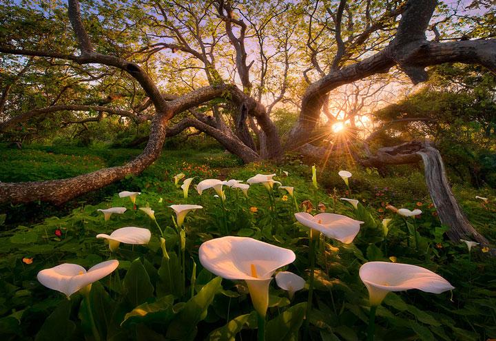 un-photographe-sublime-les-paysages-naturels-damerique-avec-des-jeux-de-lumiere-a-couper-le-souffle38