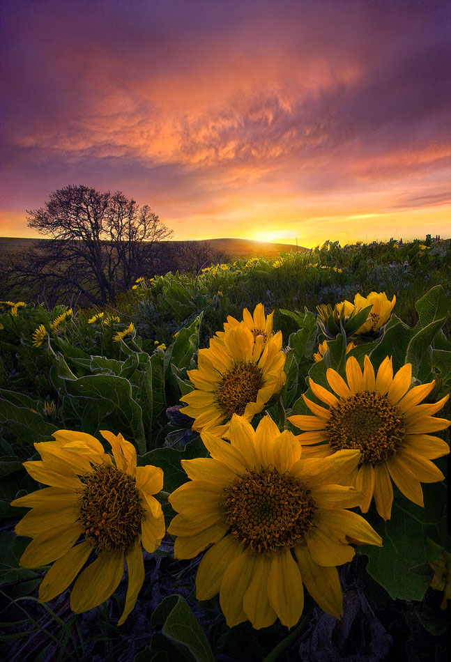 un-photographe-sublime-les-paysages-naturels-damerique-avec-des-jeux-de-lumiere-a-couper-le-souffle37