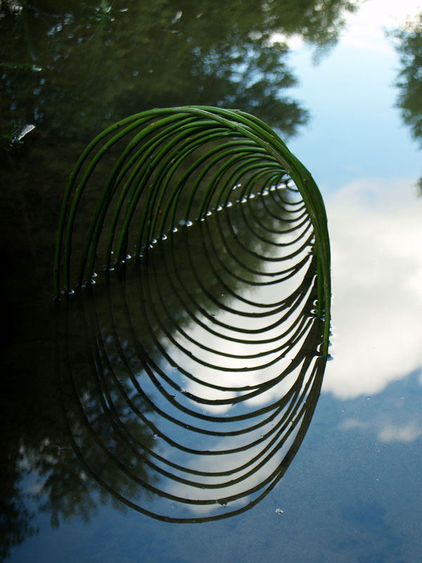 Symmetrical artworks of French artist Ludovic Fesson using nature, light and water reflections