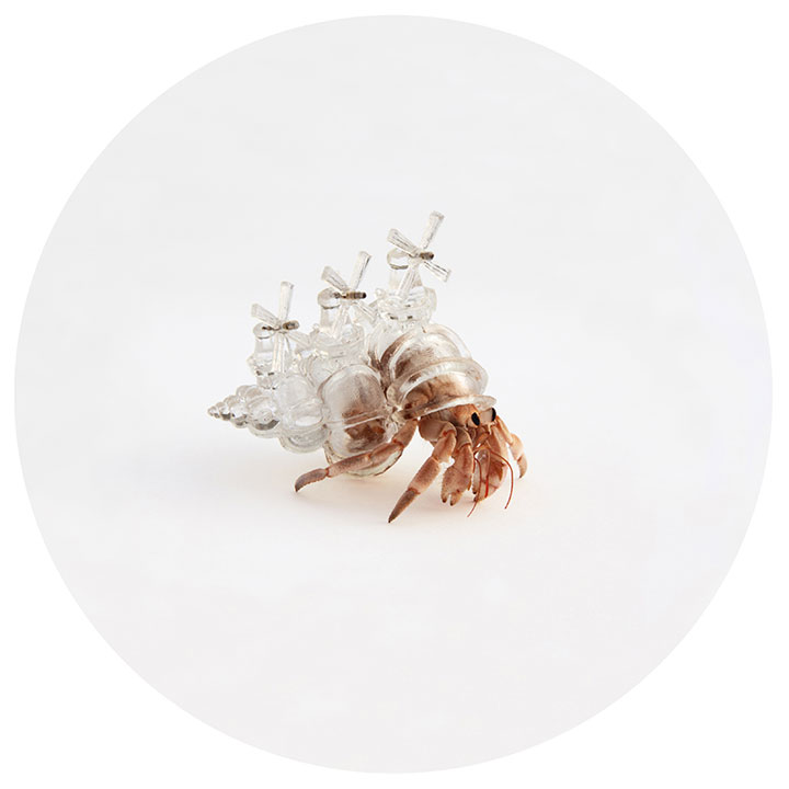 Artist Makes Transparent Homes (Shells) For Hermit Crabs