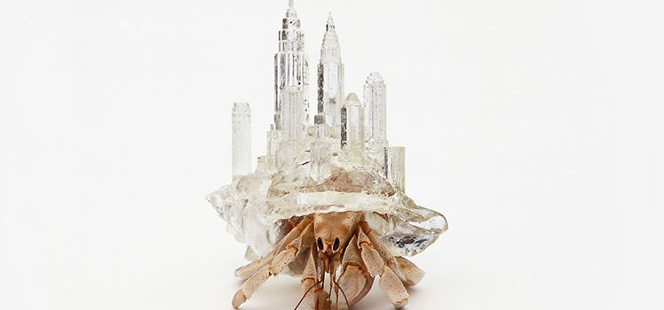 Transparent Homes For Hermit Crabs 2