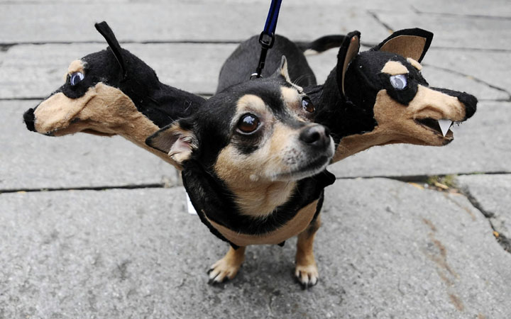 Cerberus, guardian of Hell-Amazing Animal Halloowen Disguises