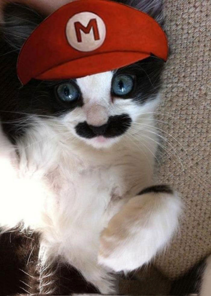 Cat Mario-Amazing Animal Halloowen Disguises