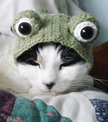 The frog cat-Amazing Animal Halloowen Disguises