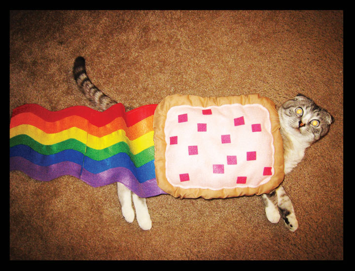 The Nyan Cat-Amazing Animal Halloowen Disguises
