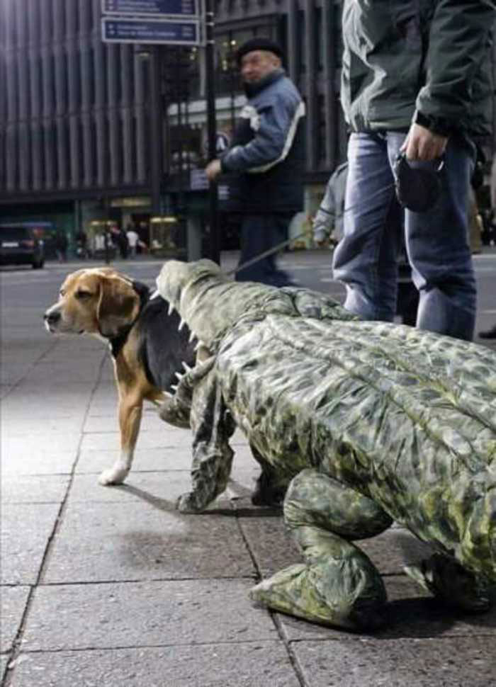 The dog half swallowed by a crocodile-Amazing Animal Halloowen Disguises