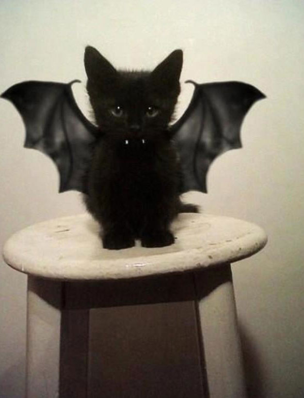 The bat cat-Amazing Animal Halloowen Disguises