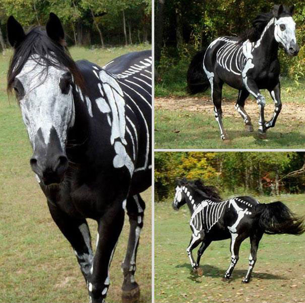 The skeleton death of horse-Amazing Animal Halloowen Disguises