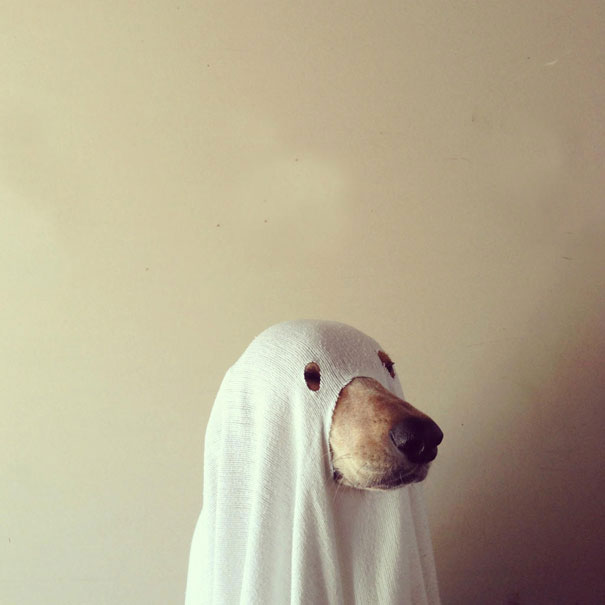 Ghost Dog-Amazing Animal Halloowen Disguises