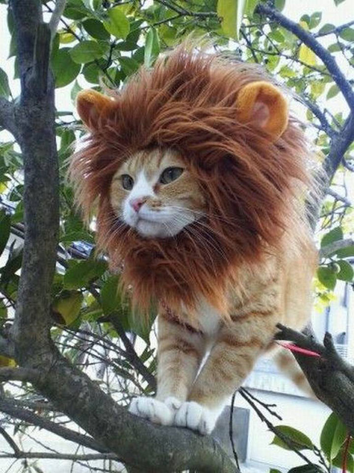 Miniature version of The Lion King-Amazing Animal Halloowen Disguises