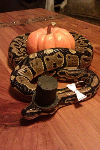 The gentleman python-Amazing Animal Halloowen Disguises