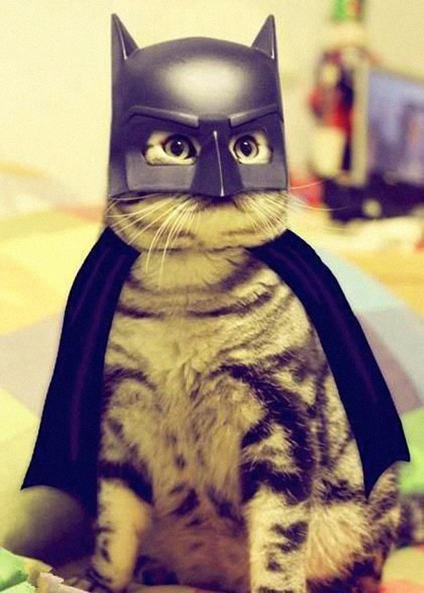 The feline version of Batman: Batchat!-Amazing Animal Halloowen Disguises