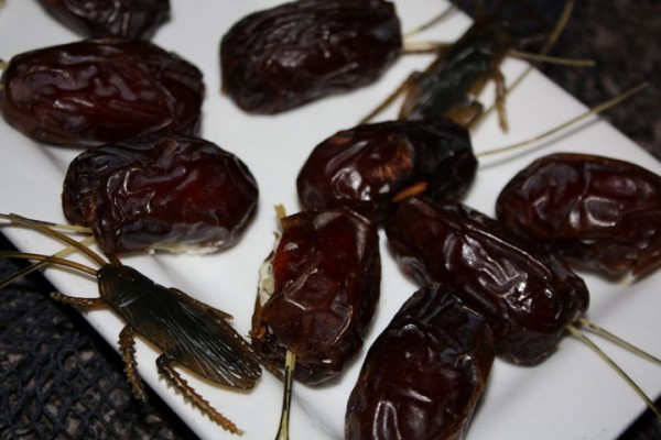 These little cute cockroaches