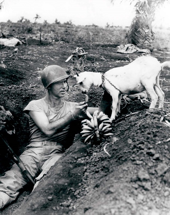 A soldier shares bananas with a goat during the Battle of Saipan in 1944