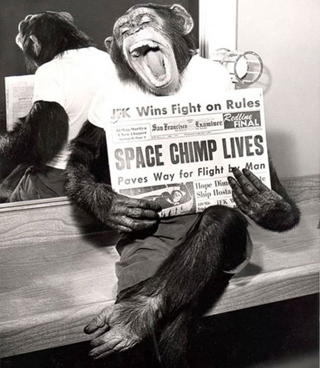31. A chimpanzee poses in front of the camera after the success of his mission in space in 1961