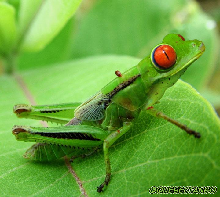 28-nouvelles-especes-danimaux-troublantes-et-completement-loufoques-crees-par-photoshop7